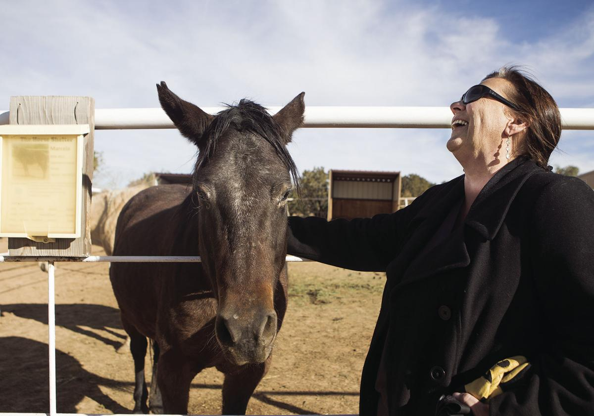 Horse Shelter hopes to rein in more cash, volunteers with