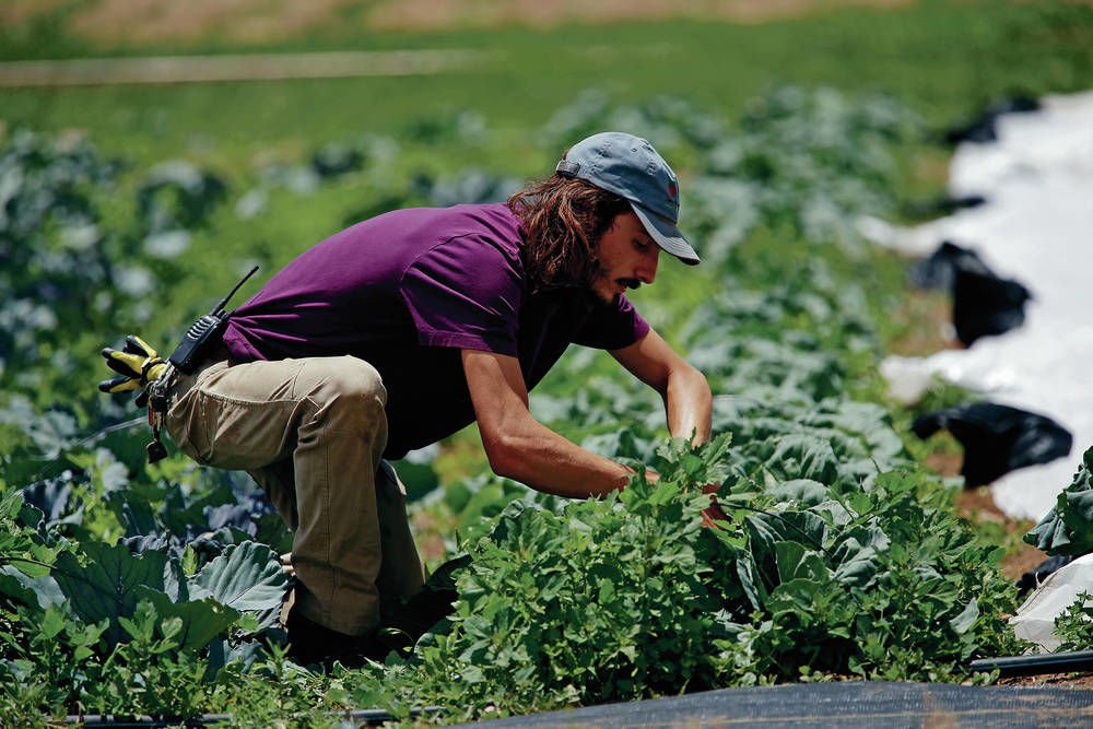 Agua Fría community farm schedules grand reopening