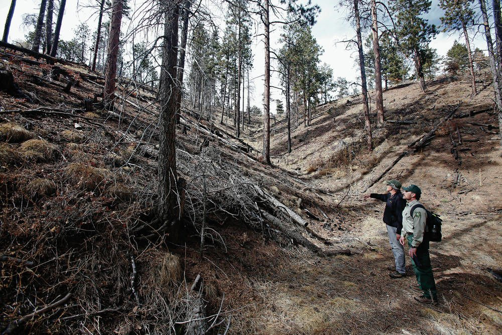 Challenge brewing to forest thinning plan