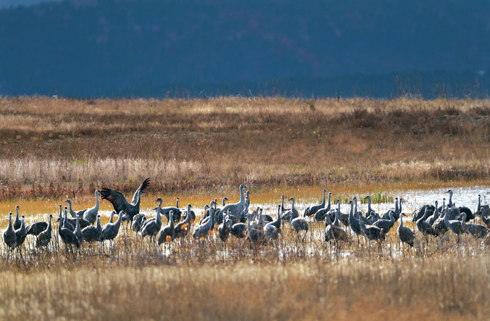 Audubon report: 50 New Mexico birds will lose habitat due to climate change
