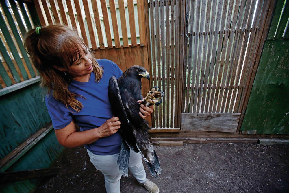 Eagle At Santa Fe Raptor Center survives West Nile virus, but loses sight for now