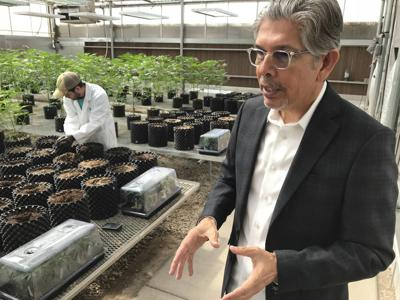 New Mexico raises cap for medical marijuana producers