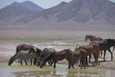 Some wild horse advocates buck at new plan