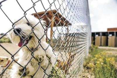 Saving lives, bleeding cash at Santa Fe animal shelter