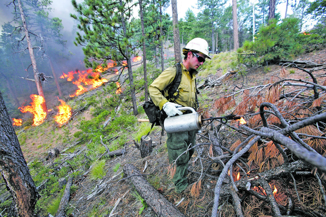 Studies question wisdom of thinning forests to stop fires