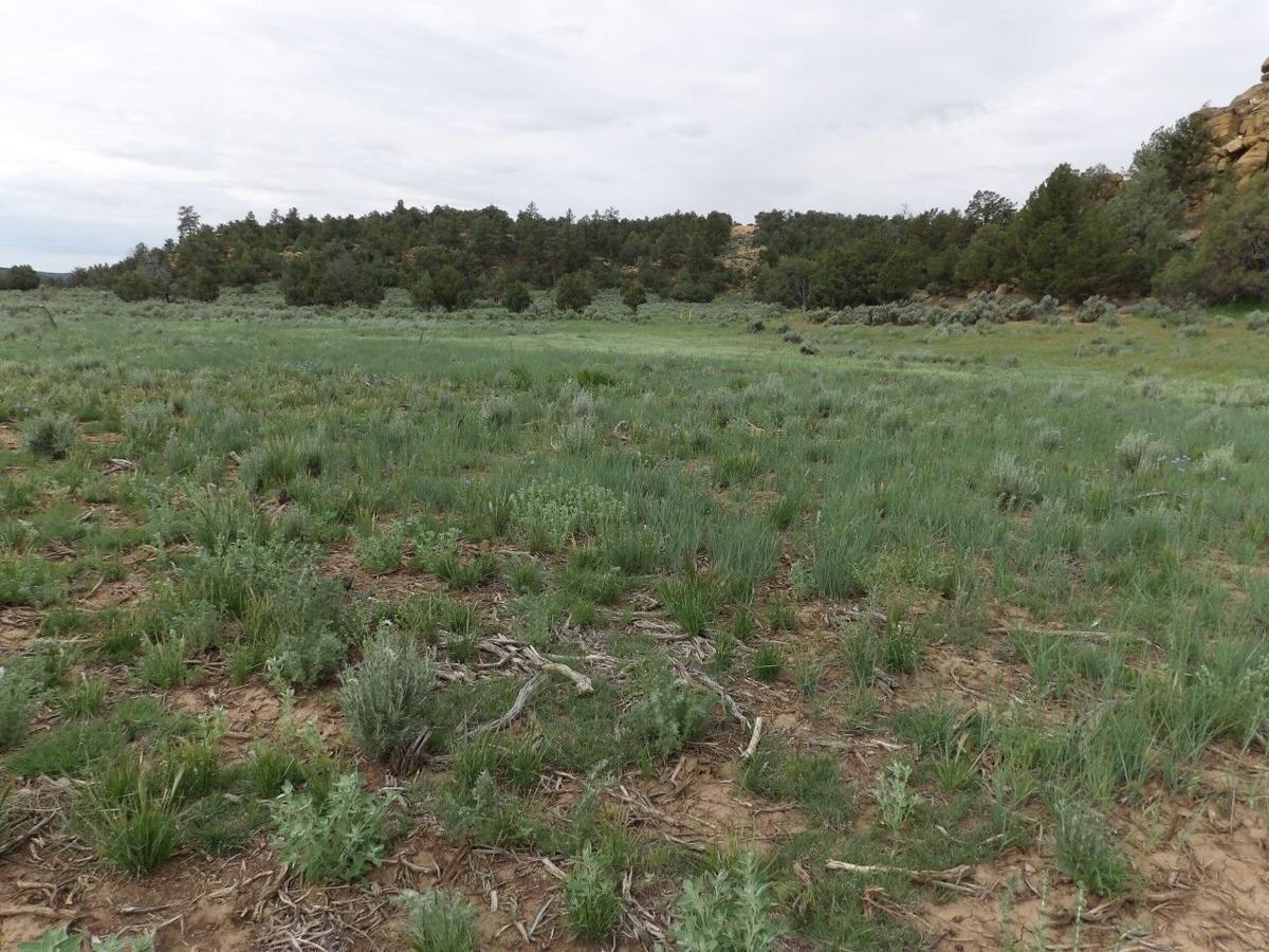 Habitat improvements2