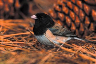 Image result for birds during harvest time
