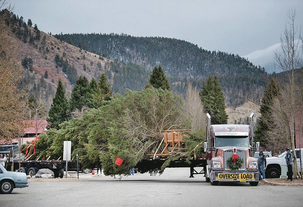 Carson National Forest spruce cut for nation's Christmas tree