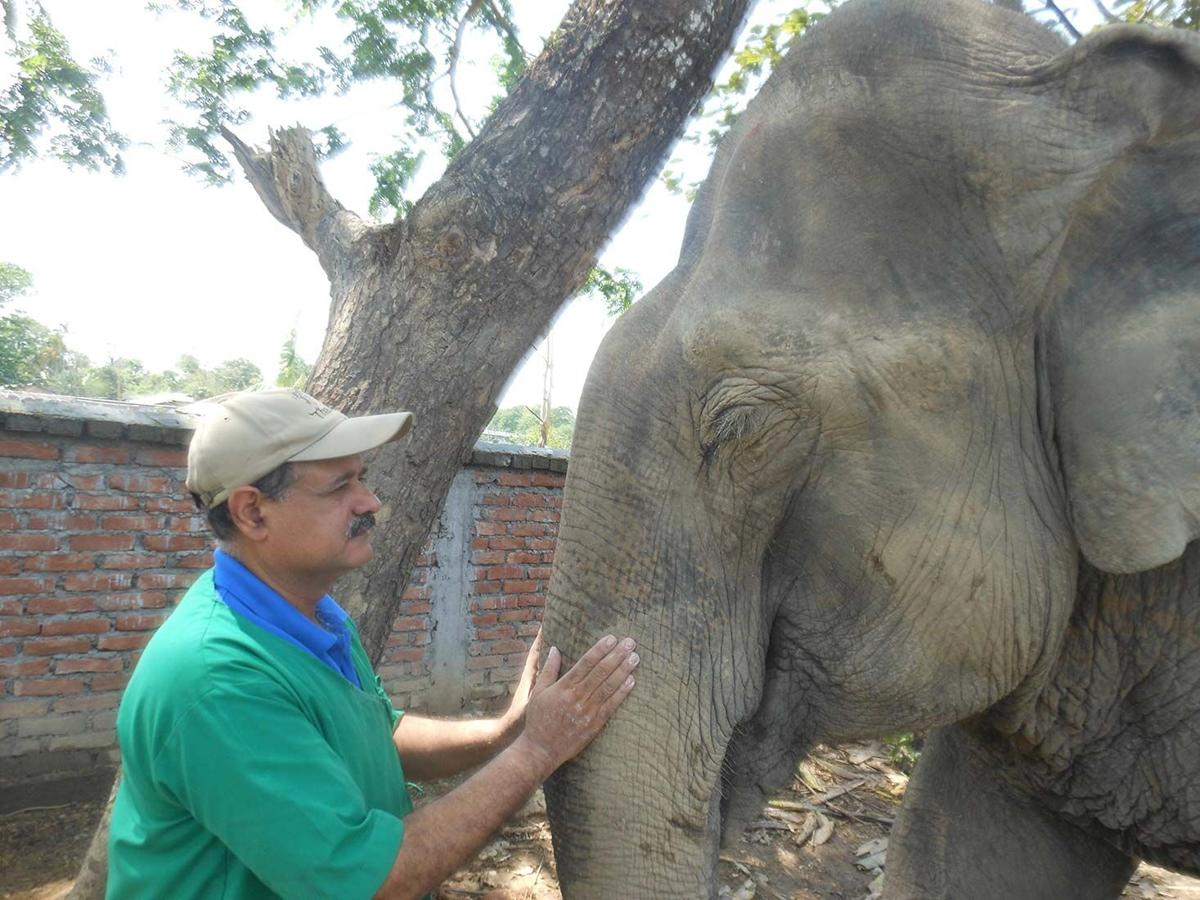 Call of the wild: 'The Elephant Doctor of India'