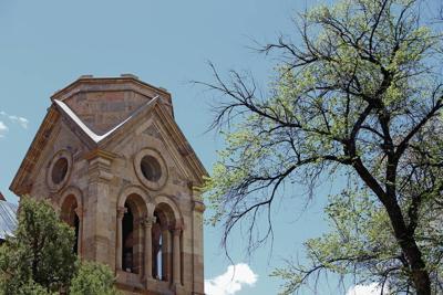 Siberian elm: Santa Fe's saga of love and hate