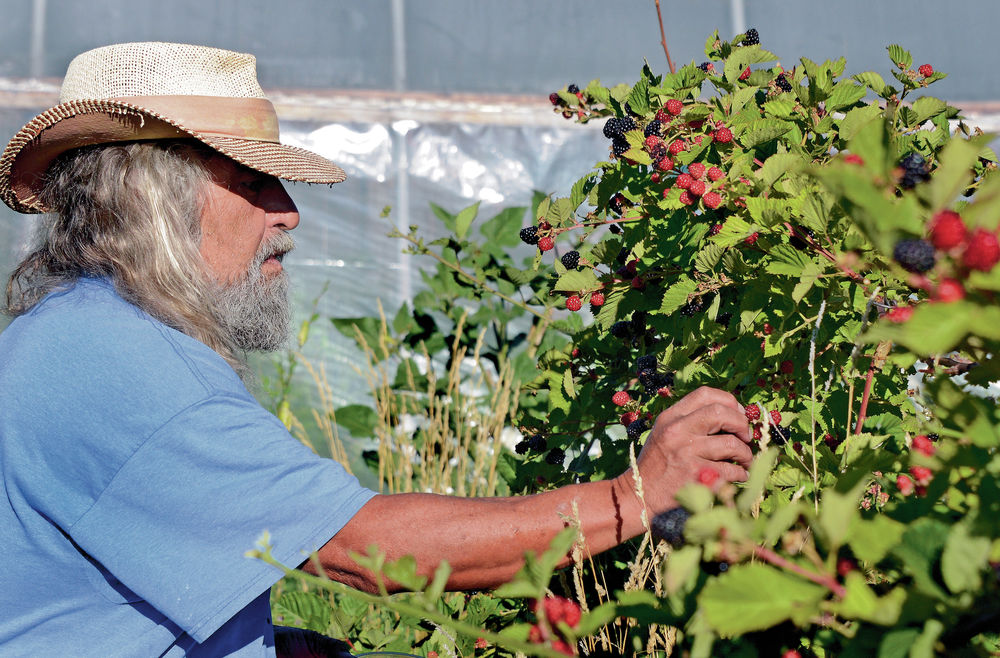Can blackberries and tilapia help New Mexico\'s small farmers thrive ...