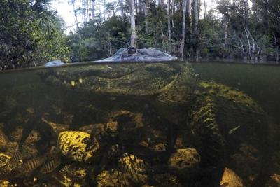 Fighting to save what remains of the Everglades