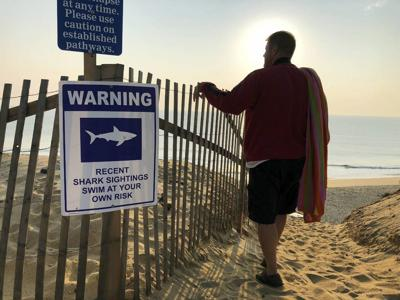 Cape Cod: Playground for tourists, young sharks