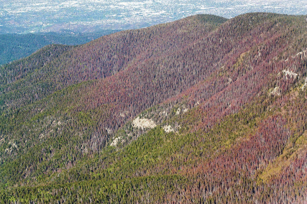 More trees dying in New Mexico