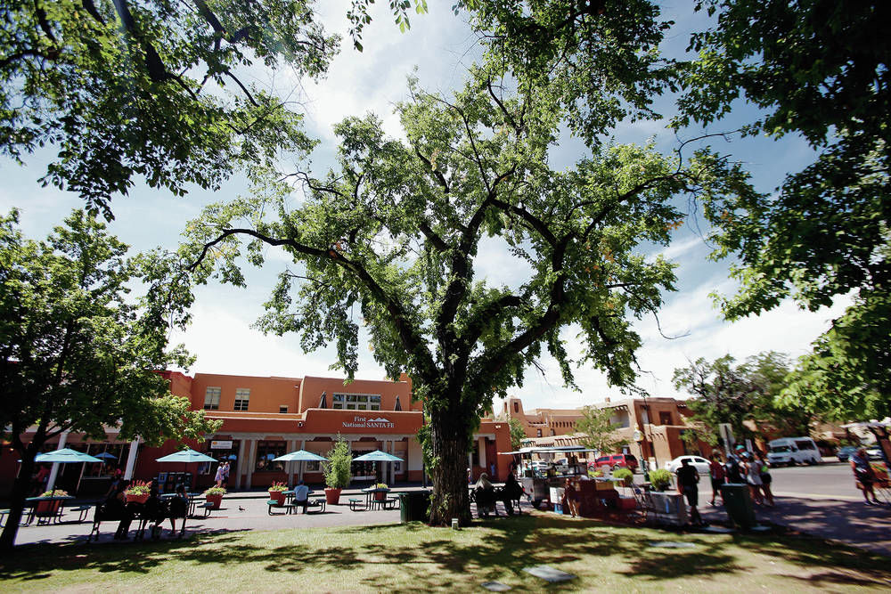 Santa Fe trees under assault by climate, inspects, parasites
