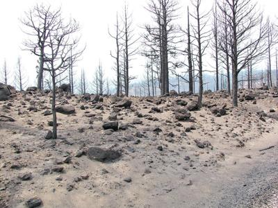 Healthy forests depend on balancing fire and water