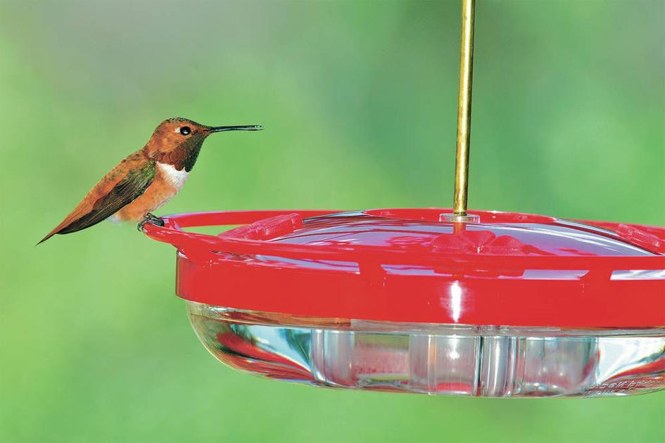 For the birds hummingbirds return to new mexico local for Weather 73025