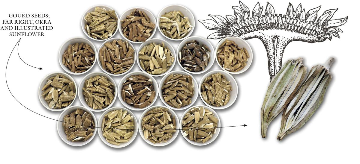 23 The Way We Eat Native Seeds Q and A 1