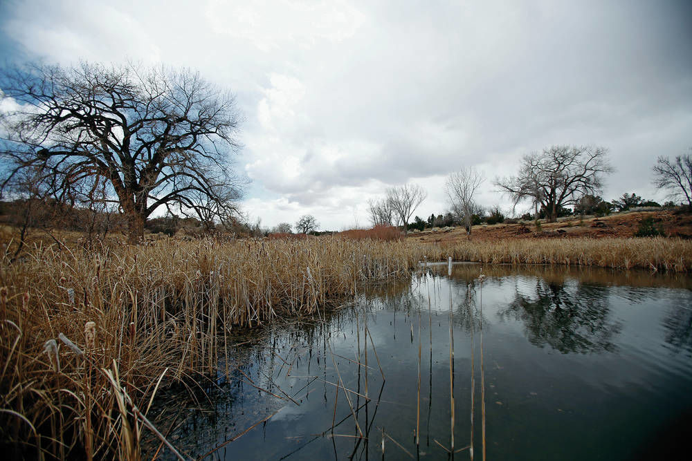 Russian olives felled in effort to preserve wetlands
