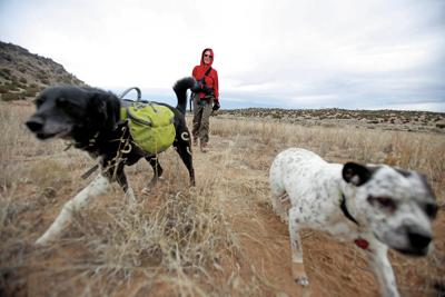 New Mexico proposes ban on wildlife trapping near cities