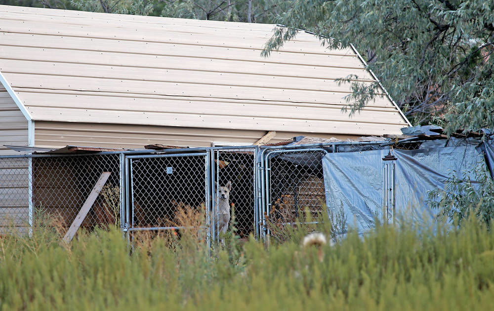 Woman in Rowe area says she's operating shelter, but neighbors say dogs need help