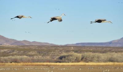 Finding 'the peace of wild things' at Bosque del Apache