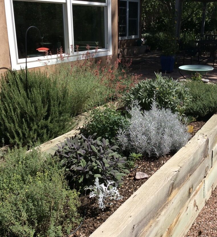 herb tea garden.jpeg