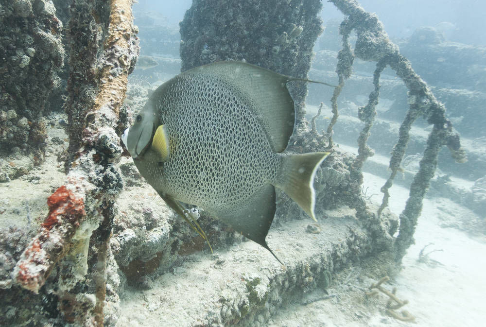 Florida coral reef cemetery is home to life in the afterlife