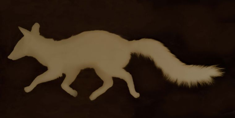 Kate Breakey: Urocyon cinereoargenteus/Gray Fox