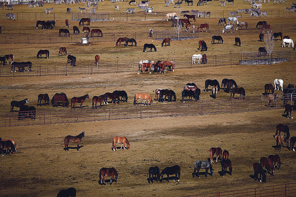 New BLM initiative to control wild horse population stirs controversy