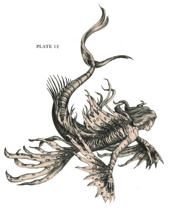 Siren Oceanus — Plate 12