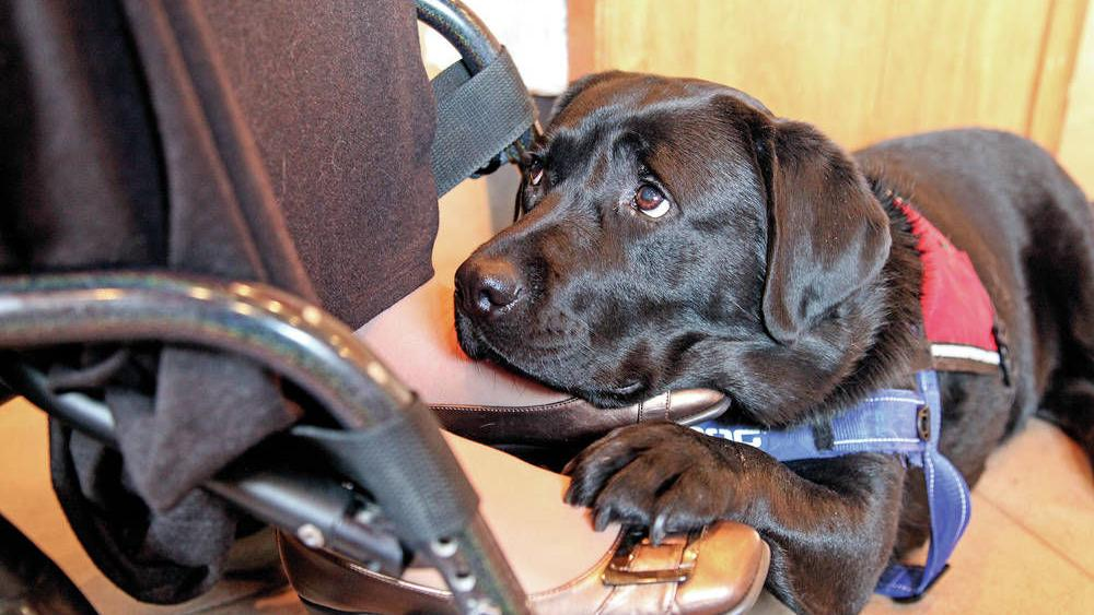 Assistance dogs provide lifeline of love | Features
