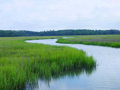 Beaufort - Jenkins Creek.jpeg