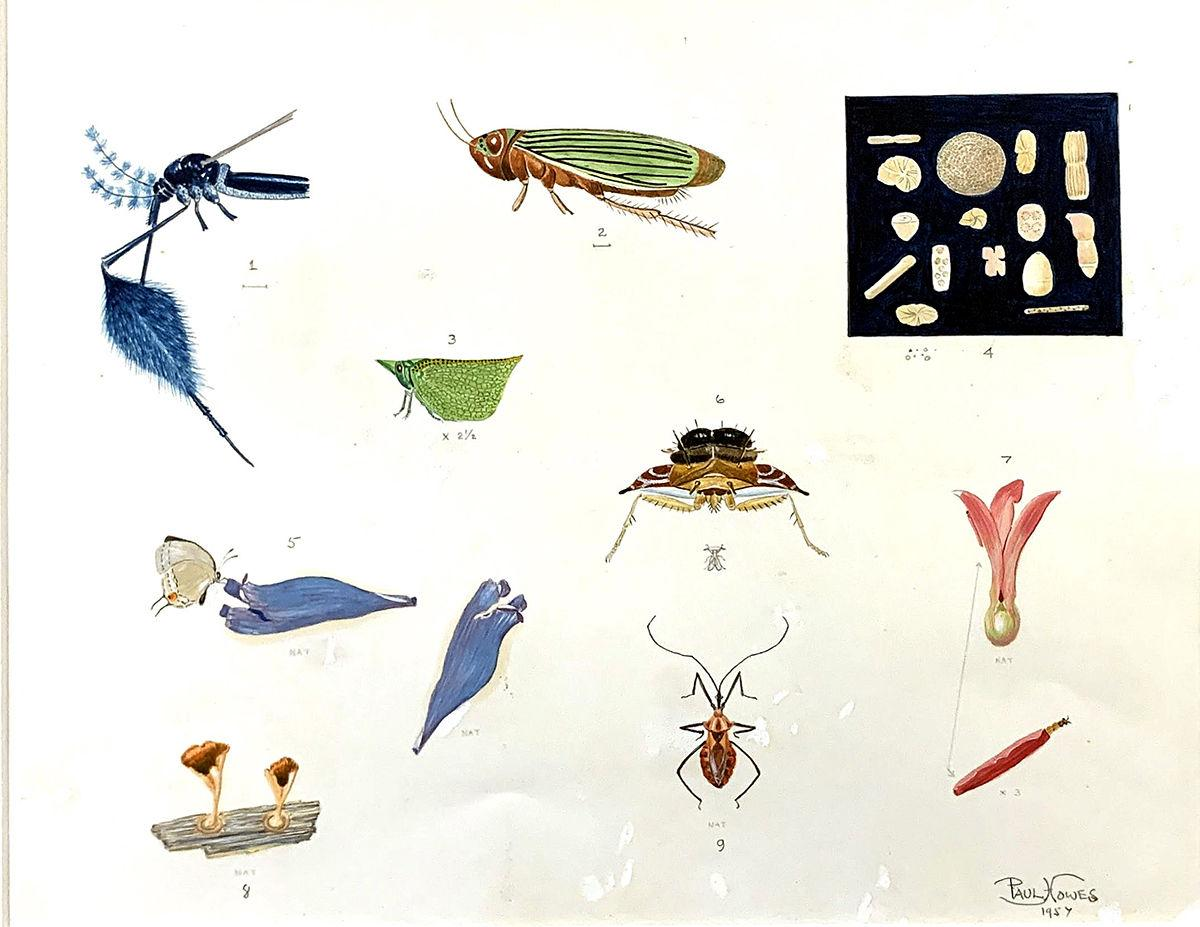 A&L Bruce Museum Howes Insect Fungi Pollen Study.jpg