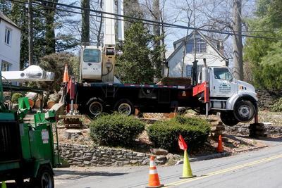 4 Kingston Road tree removal photo