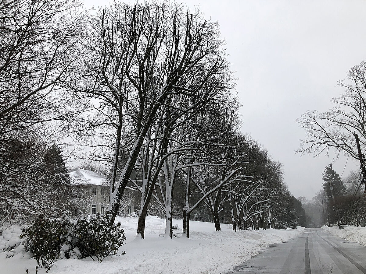Cooper Road snowy trees.jpg