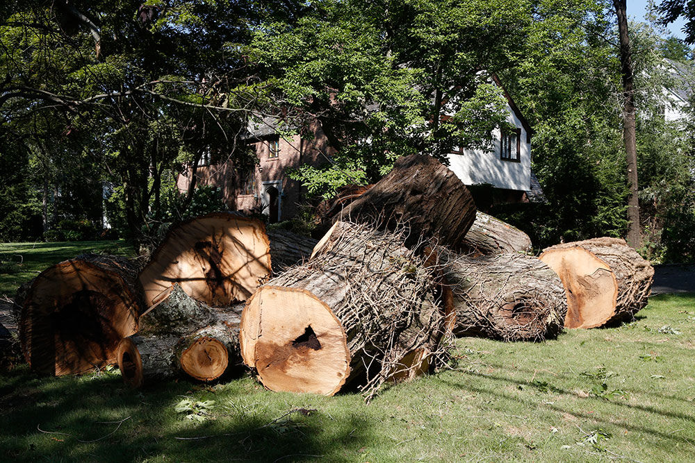Isaias Storm damage cut up tree trunk