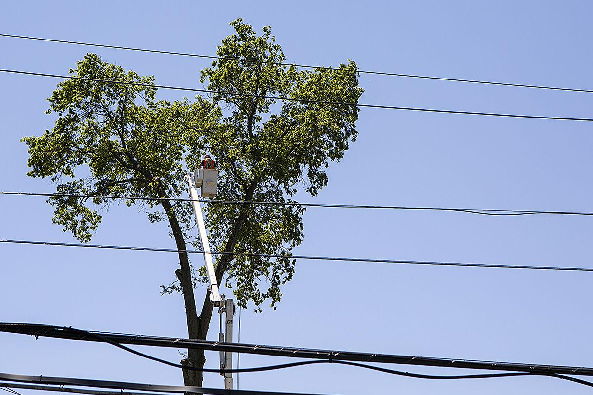 1 Greenacres tree.jpg