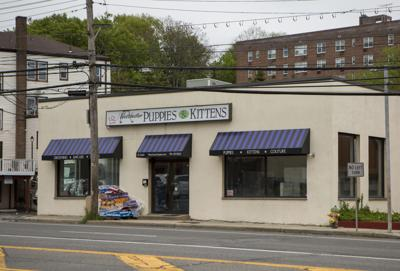 Pet store owner denies wrongdoing after agreeing to plea