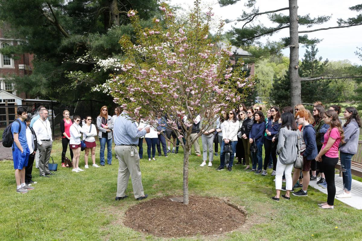 Steinberg tree 1.jpg