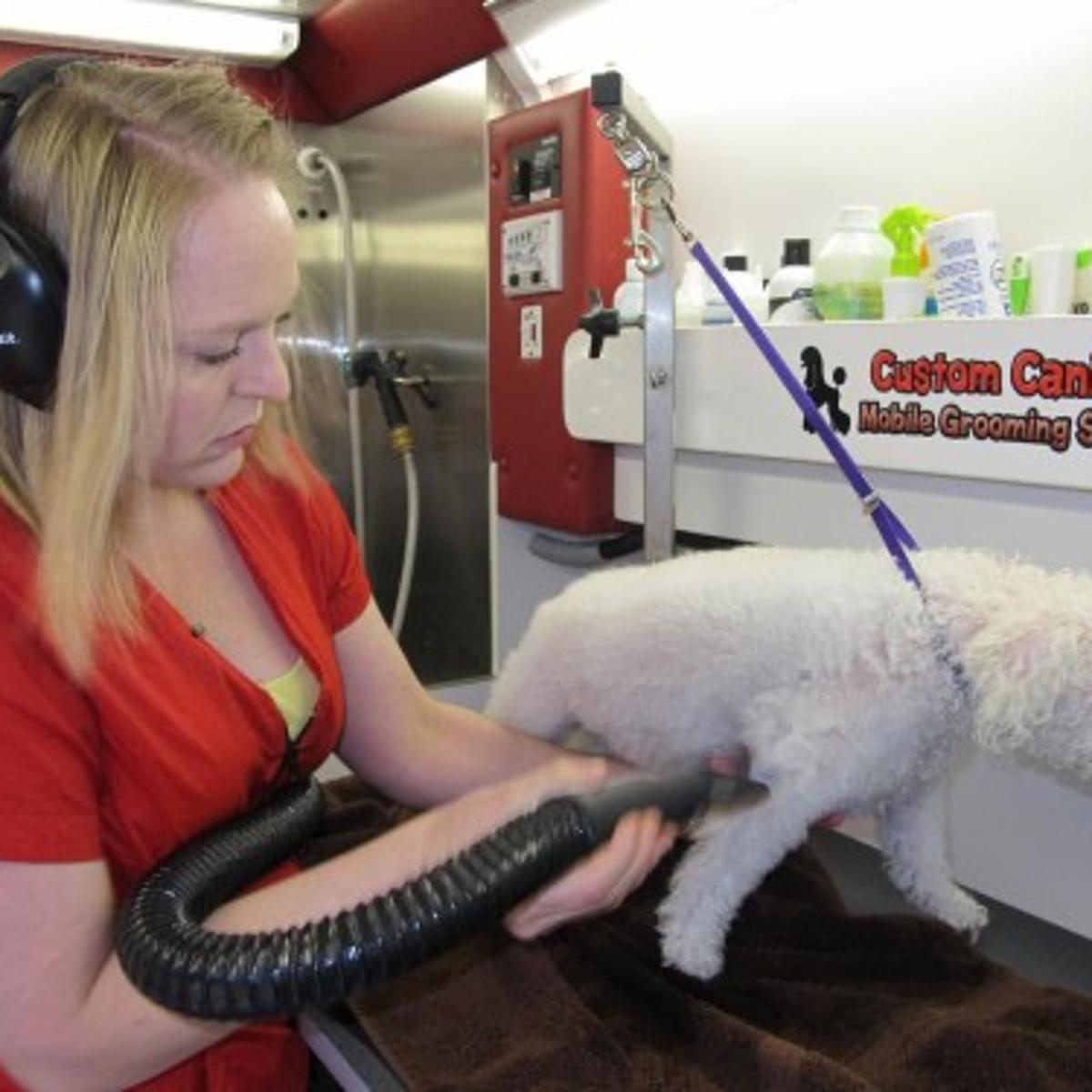 Love what you do: Horry County pet groomer wins top honors   Local