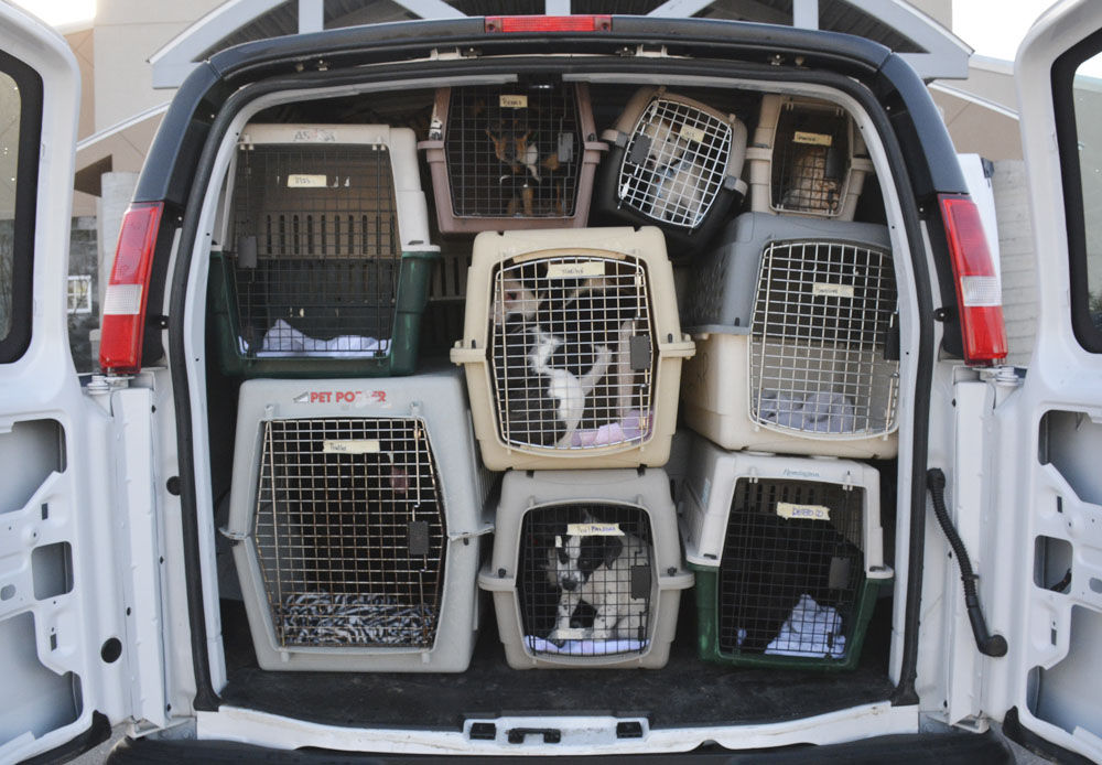 Hundreds of 'lucky dogs' rescued in Florence County each year