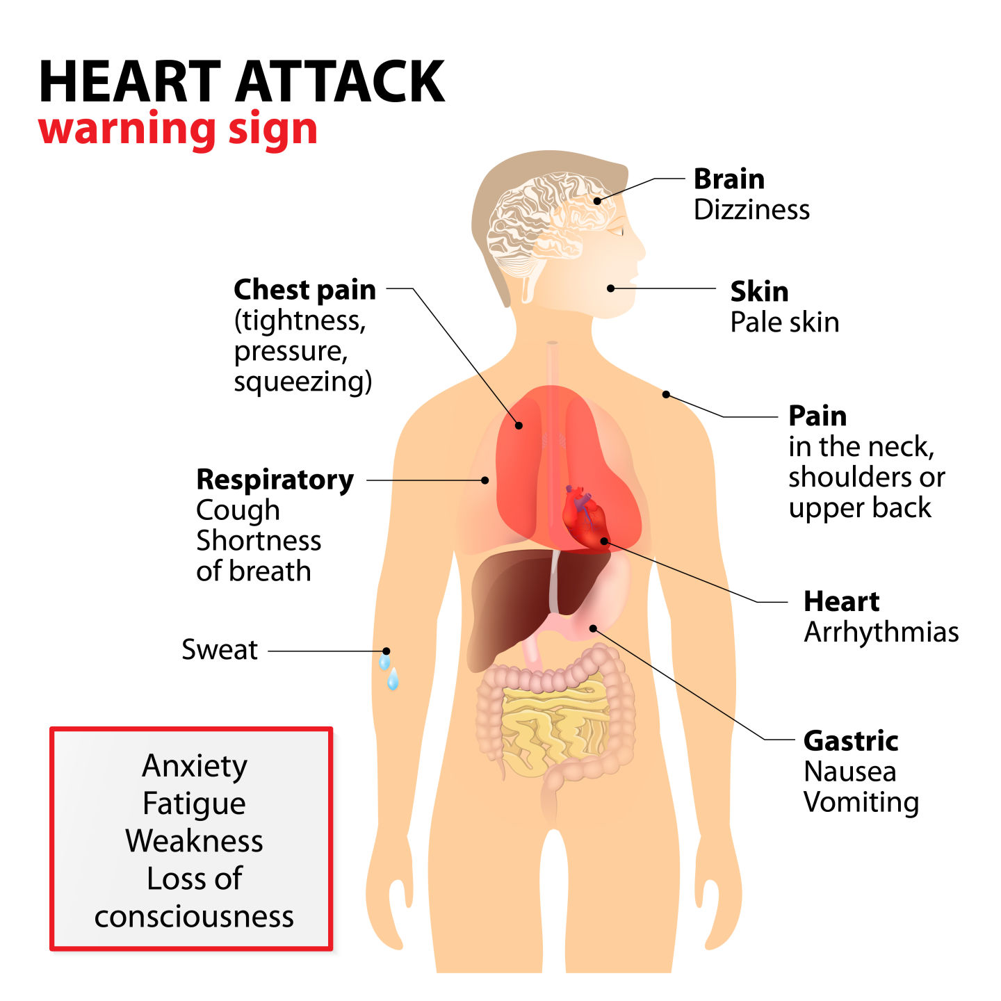 two sides of the same coin stroke and heart disease in both cases Asthma Attack heart attack