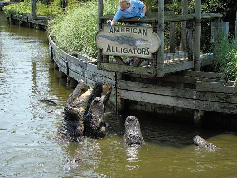 Alligator Adventure Myrtle Beach South Carolina