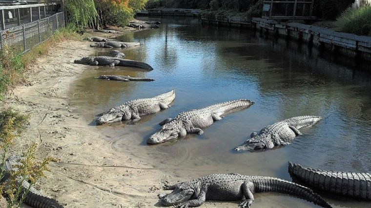 Photos Alligator Adventure Gallery Scnow Com