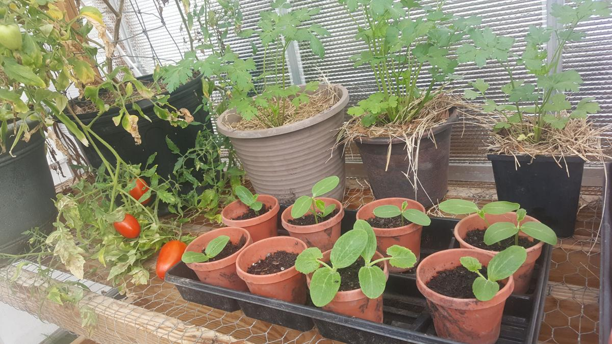 Grow Your Produce In Containers And Raised Beds Columns