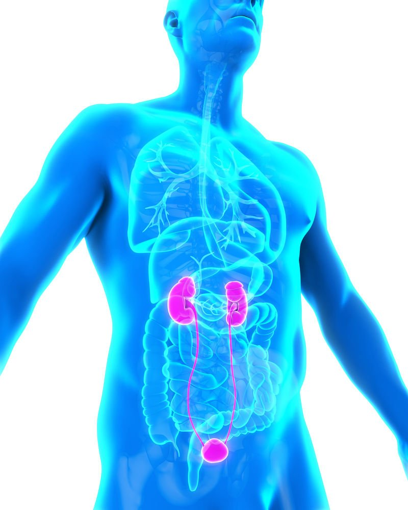 Deadly Disorder Combat Chronic Kidney Disease Before Symptoms Show