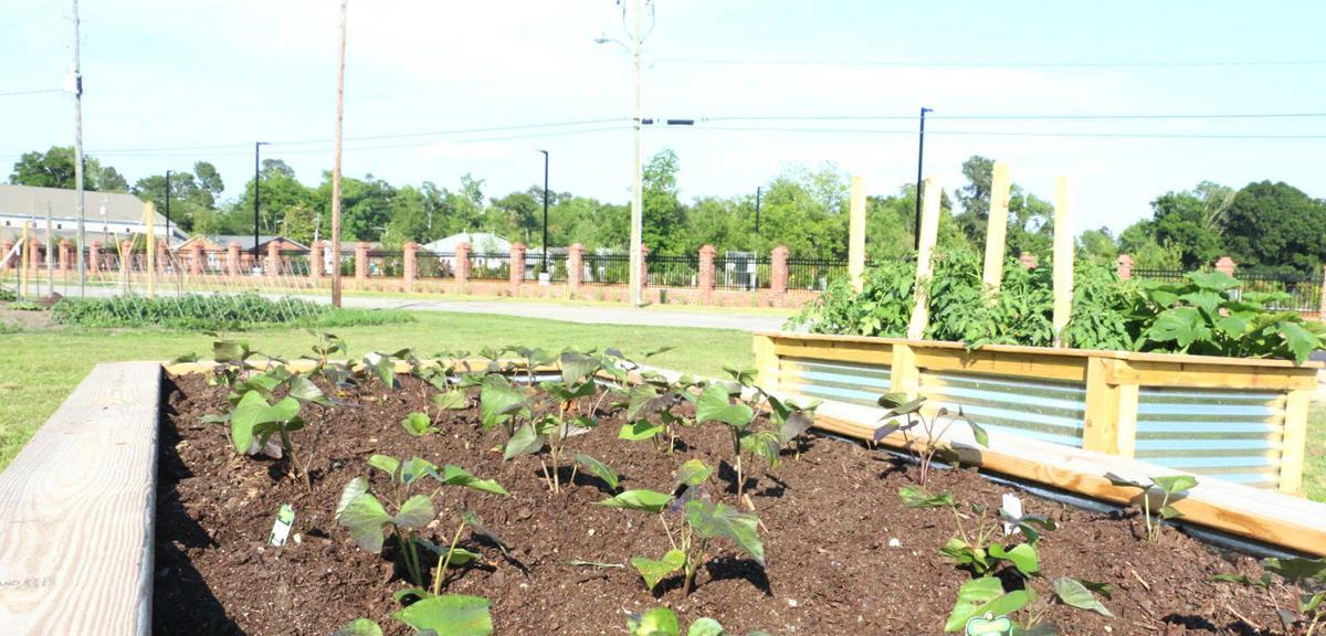 Railroad Park Community Garden