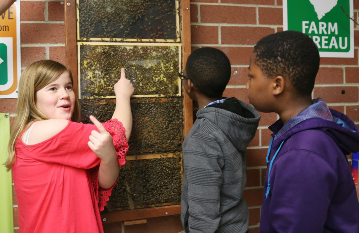 Bee Cause: Hive brings buzz to Briggs Elementary students ...