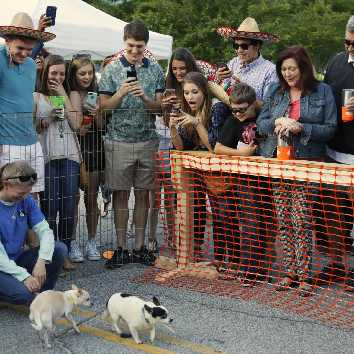 Cinco De Mayo Fiesta will feature music, food and Chihuahua